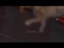 Приколы с Котами 2017 Смешные коты и кошки До Слёз Funny Cats Compilation.mp4