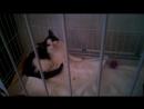 Мини-обзор благотворит. выставки кот в коробке от хостела Театр, 18.11.17