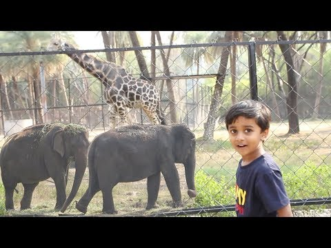 Minnu at the Zoo | Learn Animals for Children and Toddlers | Elephant | Giraffe | Crocodile | Lion