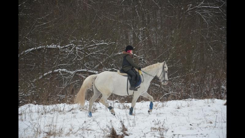Тренинг конного клуба Робин Гуд