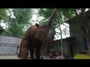 Vivid Animatronic Elasmotherium