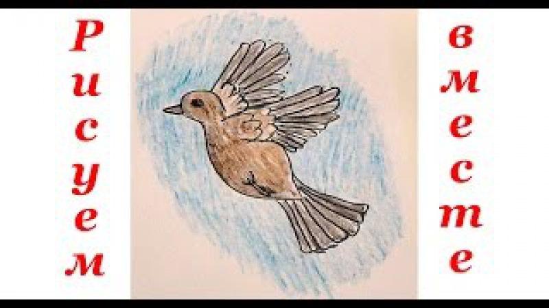 Как нарисовать птичку воробья. Уроки рисования для детей.