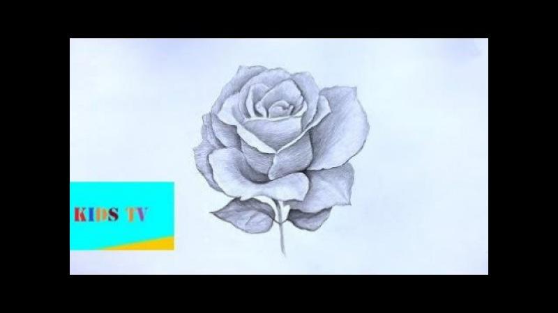 Уроки рисования. Как нарисовать РОЗУ карандашом ! $119867;ow $119905;o $119863;raw $119886; $119877;ose - как нарисо ...