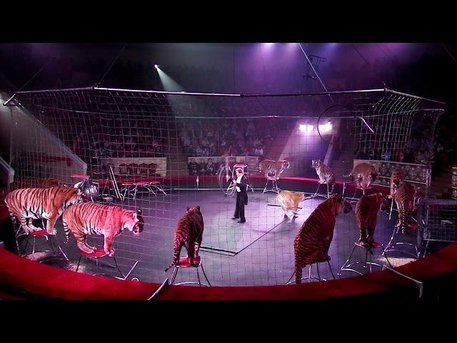 Николай Павленко и бенгальские тигры часть 1