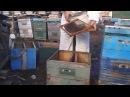 Универсальный метод борьбы с роением пчел схематично уроки пчеловодства