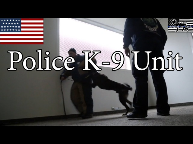 Police K-9 Unit Training Session