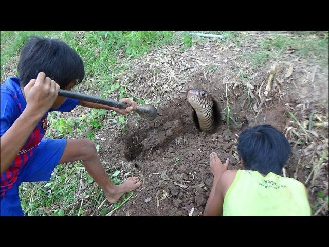 WOW Dos muchachos VALIENTES encuentran y ATRAPA la serpiente en el agujero de rata