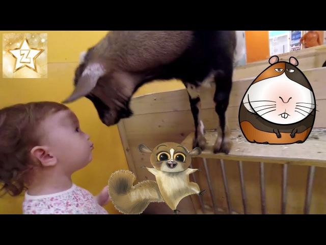 Petting zoo for baby in Russia | Контактный зоопарк для детей Погладь Енота в Москве | ZlataGoldStar