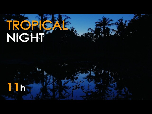 Tropical Night - Nature Sounds for Sleeping - Frogs Crickets - 11 Hours Long - Relaxing HD Video
