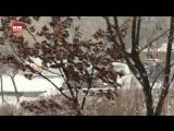 Подборка аварий с дня жестянщика во Владивостоке