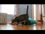 Кот - не дурак!