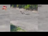 Мангуст и кобра устроили захватывающую схватку на турнире по гольфу