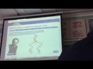Репликация ДНК 1