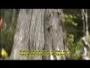 ВК. Новая Зеландия - Средиземье - Ривенделл