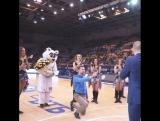 Пермяк сделал предложение на матче баскетбольного клуба Парма