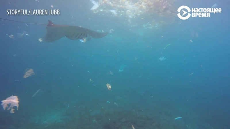 Морские дьяволы плавают в мусоре