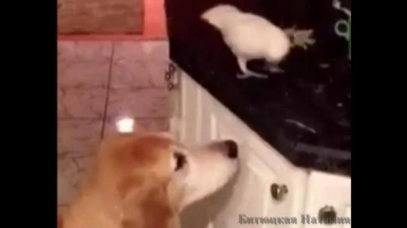 Животные - герои