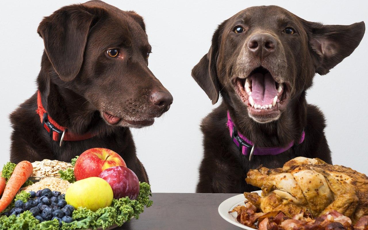 Хорошо ли кормить собаку вегетарианский собачьей пищей?
