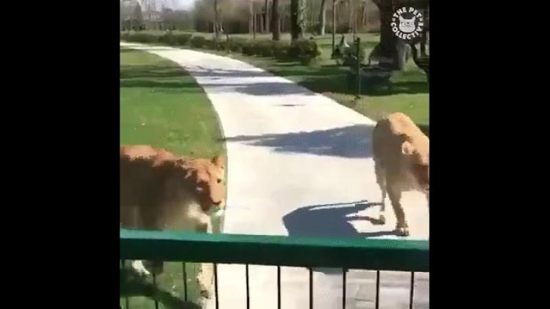 Дружба человека и теплота зверьков