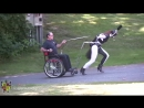 sprinting Red Rocket ponygirl gives fabulous carriage-ride ii/iii