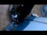 Ральф и котик Барсик кушают с одной миски. Друзья! 03.12.17