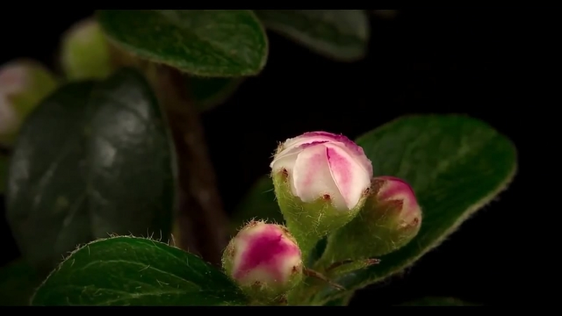Сказочный мир_ Растет трава Распускаются цветы и почки_ Ускоренная съемка » Freewka.com - Смотреть онлайн в хорощем качестве