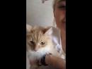 Любимая кошка 🐱