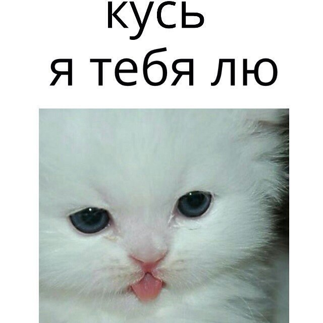 e_5sDqOvphs.jpg