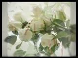 Белые цветы (Александр Шапиро)