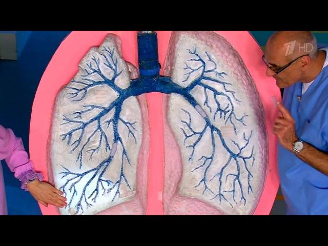 Жить здорово! Пневмония. Воспаление легких.(08.11.2016)