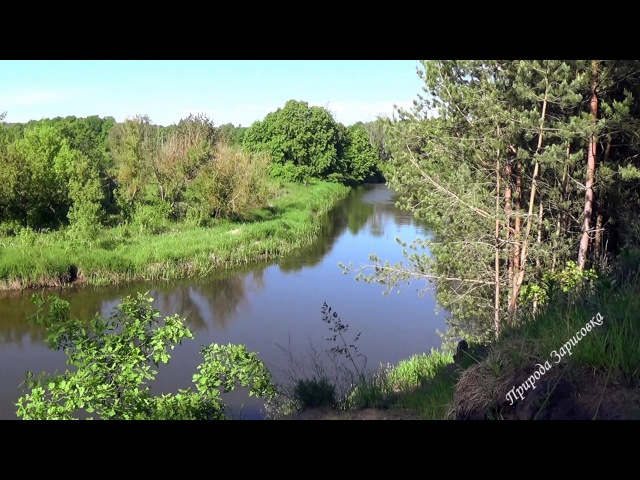 Природа. Лес. Река. Звуки природы. Утро. Пение Птиц. Релакс. Медитация. Сон.