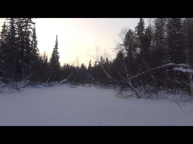 Девственная тайга в мороз 55 одиночный поход охота рыбалка сибирь обморожение в