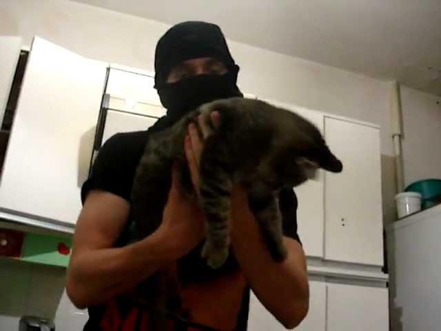 Кот автомат / Cat machine avtomat