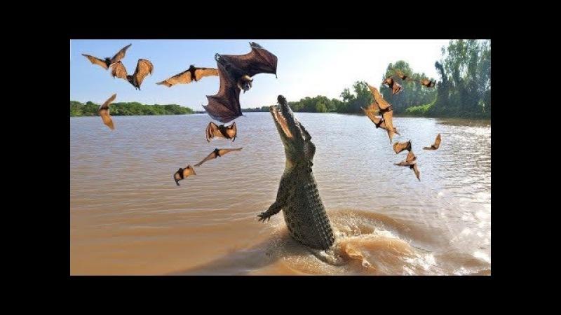 Cá sấu vs Dơi Thánh Bắt Dơi Vua đầm lầy thế giới động vật Crocodile vs Bat vs Snake