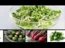 Wajib nih di coba 10 sayuran sehat yang baik untuk di makan SERIUS LOH