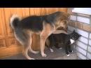 Драка Пес и Кот
