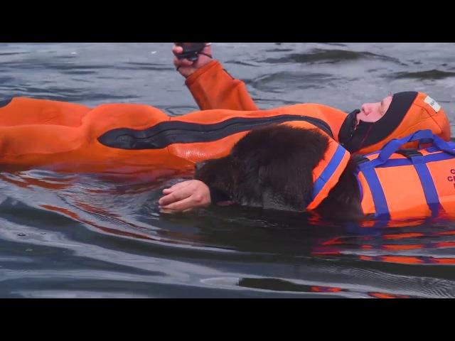 Собачья работа. МЧС спасение на водах