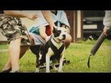 V Pit Bull Show Slovakia &amp IV Cup Of Carpathians 2017 video 2