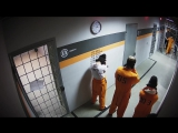 Энгри Бердс в тюрьме