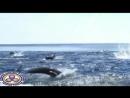 РЕЛАКС-видео 3