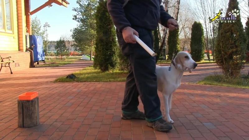 Как научить любую собаку аппортировке, сочетание элементов игры и обучения