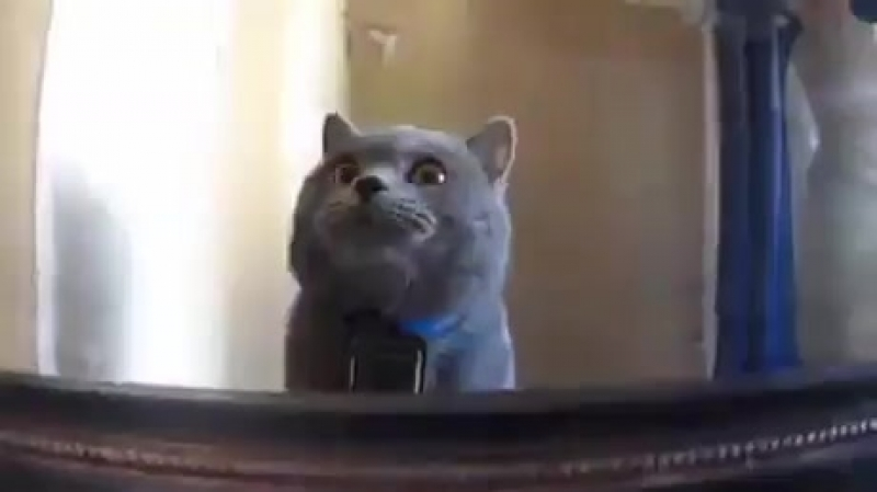 Жизнь глазами кота (хорошее настроение, юмор, смешное видео, коты буйствуют, в мире животных, кошка, котенок, киса, хозяин).