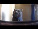 Жизнь глазами кота хорошее настроение, юмор, смешное видео, коты буйствуют, в мире животных, кошка, котенок, киса, хозяин.