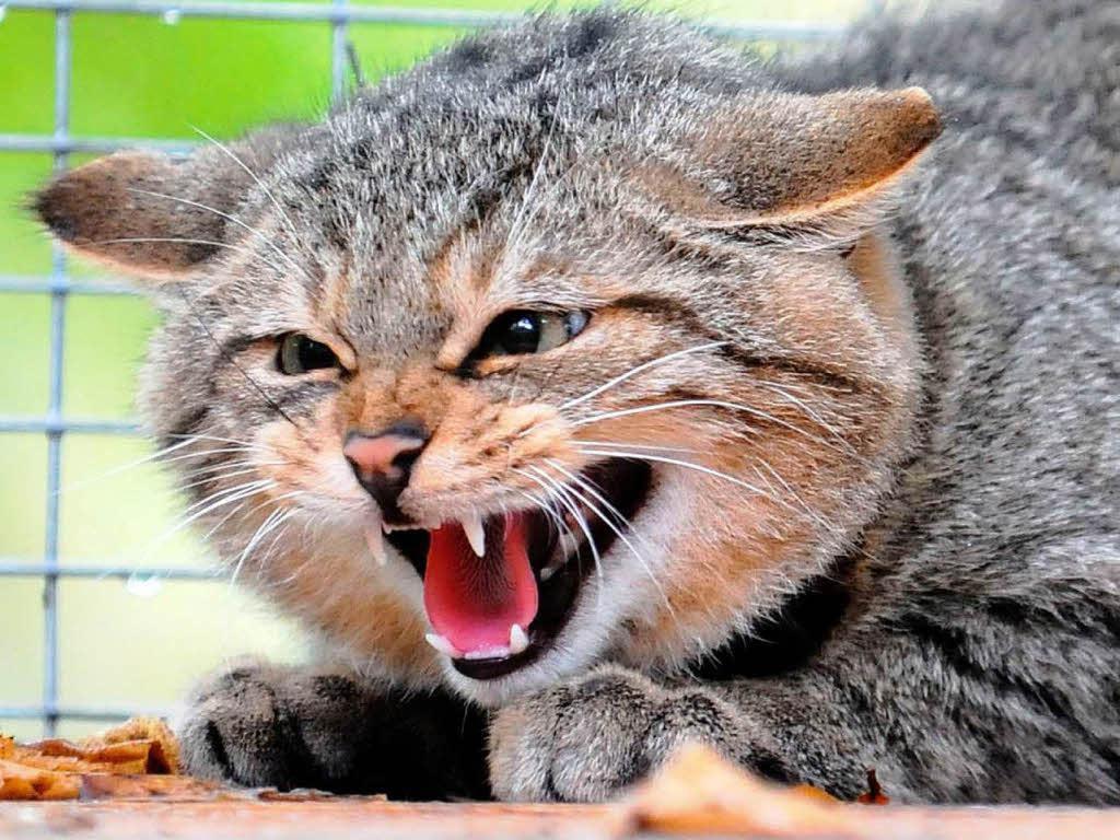 Под Таганрогом кот, заболевший бешенством, покусал хозяина