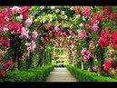 Самые красивые и роскошные цветочные сады Бутчартов, остров Ванкувер