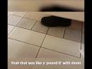 Случай канадском туалете