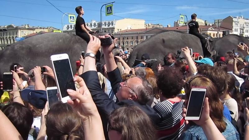 По улице слона водили!