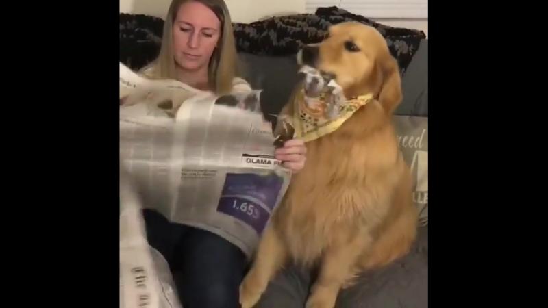 мама...Газета для измельчения, а не для чтения