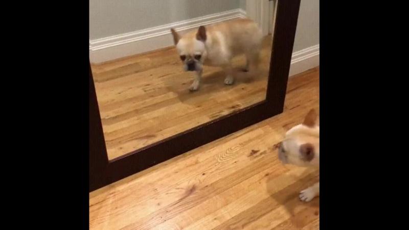 Когда утром увидел себя в зеркале :)