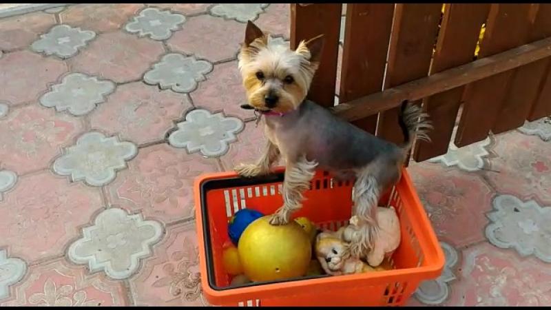 Шегги выбирает игрушку